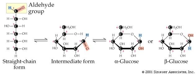 L Glucopyranose Intro Bio Lec. 2 Colum...
