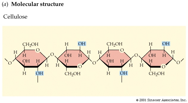Intro bio lec 2 columbia university molecules can then associate side by side via hydrogen bonds to each other to form a fiber of great strength eg in cotton and it also contributes ccuart Choice Image