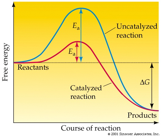 enzymes and activation energy relationship