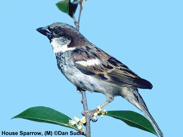 sparrow bush middle eastern singles Of the middle east, and had great influence with the george w bush administration on middle eastern  single most important development in middle east .