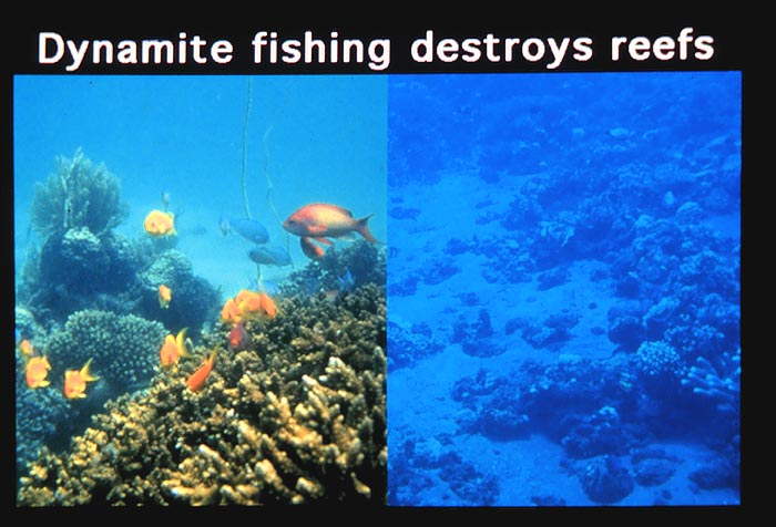 Coral Reefs: Past, Present and Future