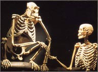 anatomically modern humans essay Classification of modern humans (homo sapiens) within the order primates   this species far back into time to include many anatomically distinctive fossils that .