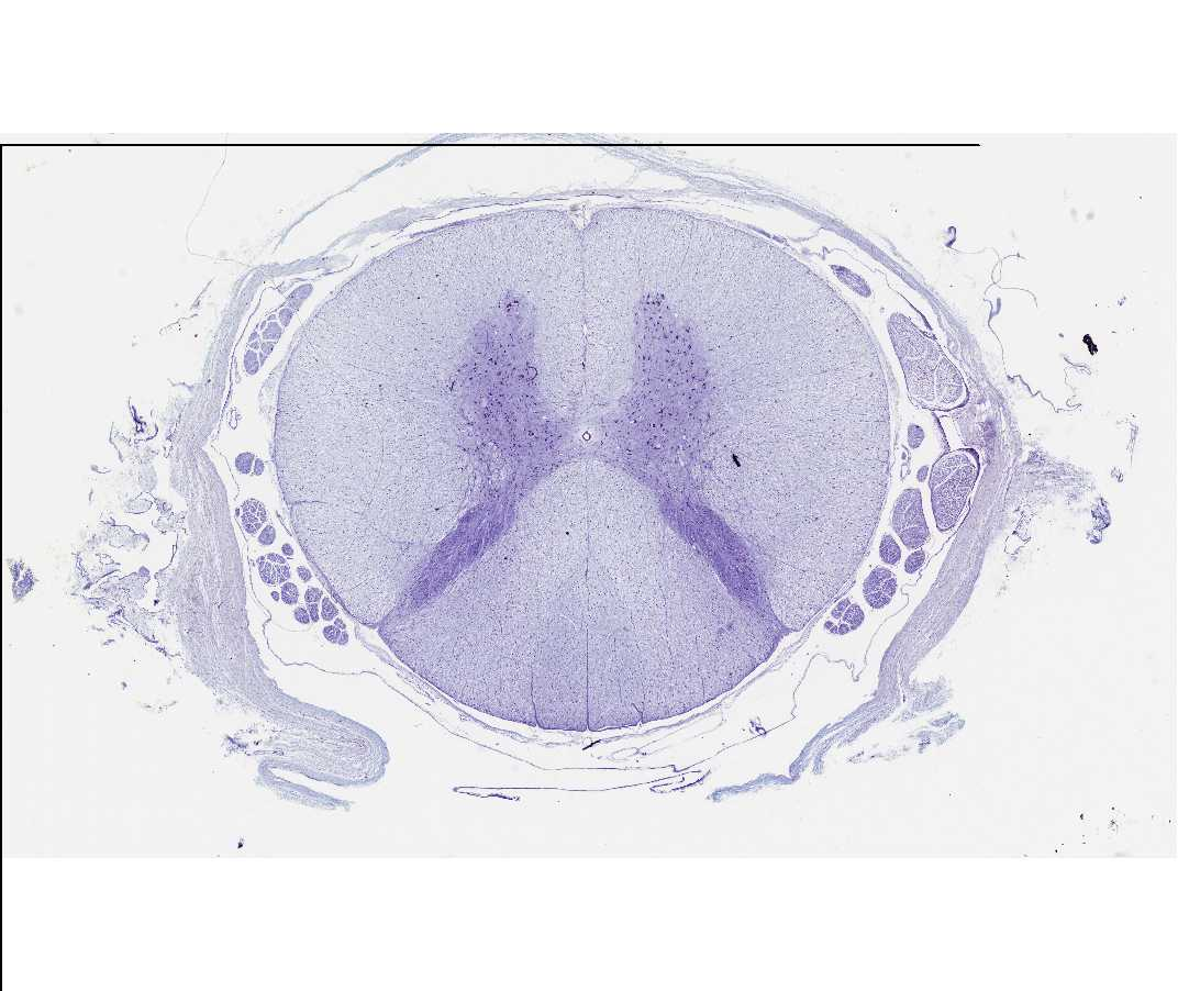 Histology Laboratory Manual
