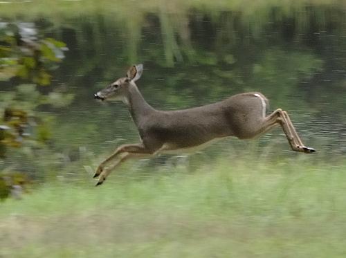 words that rhyme with deer