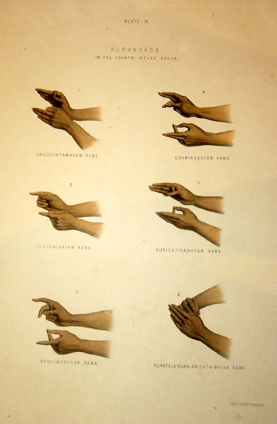 ms13 hand signs wwwpixsharkcom images galleries with