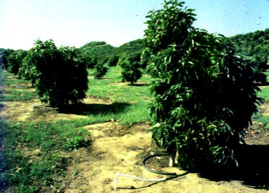 drip irrigation advantages and disadvantages pdf