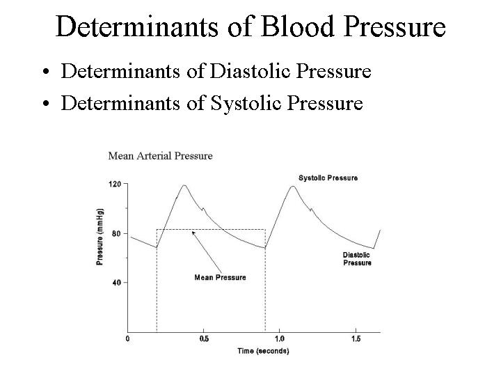 Total peripheral resistance; Cardiac output = Heart rate x Stroke volume