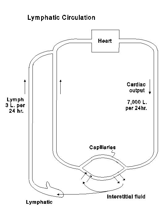 chapter 6 rh columbia edu Chest Lymph Nodes Diagram Lymphatic System Diagram