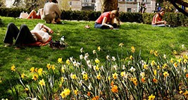 A planting of flowers in front of students laying on the grass