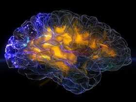 A see-through, glass model of a human brain, lit with subtle shades of gold, blue, and purple