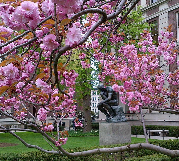 "Rodin's sculpture ""The Thinker"" sits in front of Philosophy Hall on Columiba University's Morningside campus, surrounded by cherry blossoms"